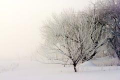 Niebla del invierno Fotos de archivo