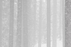 Niebla del invierno en un bosque Fotografía de archivo libre de regalías