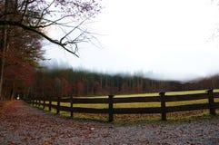 Niebla del invierno que asoma sobre prado Fotos de archivo libres de regalías