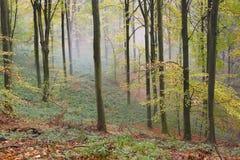 Niebla 2 del otoño del bosque Fotografía de archivo