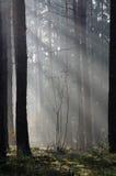 Niebla del otoño en bosque imagenes de archivo