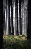 Niebla del otoño en bosque Fotos de archivo
