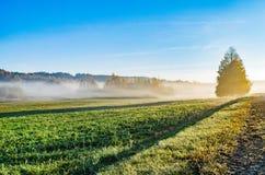 Niebla del otoño viva y colorida una mañana hermosa imágenes de archivo libres de regalías