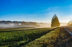 Niebla del otoño viva y colorida una mañana hermosa imagen de archivo libre de regalías