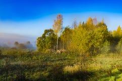 Niebla del otoño viva y colorida una mañana hermosa fotos de archivo