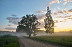 Niebla del verano Imágenes de archivo libres de regalías