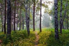 Niebla del verano en el bosque Imagen de archivo libre de regalías