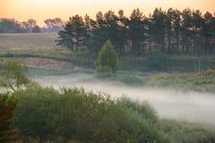 Niebla densa de la mañana en un bosque del verano Imagenes de archivo