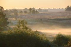 Niebla densa de la mañana en un bosque del verano Fotos de archivo