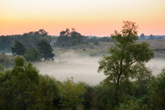 Niebla densa de la mañana en un bosque del verano Foto de archivo libre de regalías