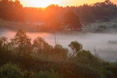 Niebla densa de la mañana en un bosque del verano Foto de archivo
