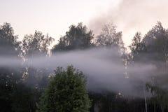 Niebla densa sobre bosque en la puesta del sol Imagen de archivo libre de regalías