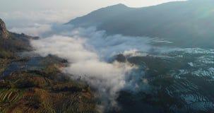 Niebla dinámica sobre campos de la terraza del arroz metrajes