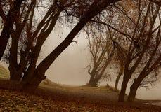 Niebla en arbolado Imagen de archivo libre de regalías