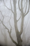 Niebla en bosque Foto de archivo