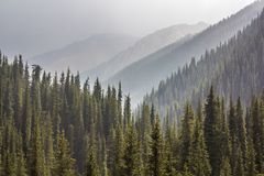 Niebla en bosque Foto de archivo libre de regalías