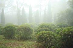 Niebla en bosque Fotos de archivo