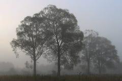 Niebla en bosque imagen de archivo libre de regalías