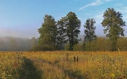 Niebla en bosque Imágenes de archivo libres de regalías