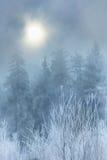 Niebla en bosque del invierno Imagen de archivo libre de regalías