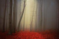 Niebla en bosque mágico Fotografía de archivo libre de regalías