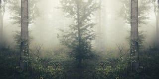 Niebla en bosque surrealista con tonos silenciados Foto de archivo libre de regalías