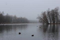 Niebla en el blanco del lago El pabellón blanco del lago, de Venus y la colonia de grajos en Gatchina parquean imagen de archivo