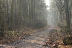 Niebla en el bosque. Imágenes de archivo libres de regalías