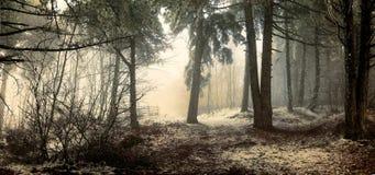 Niebla en el bosque Fotografía de archivo