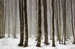 Niebla en el bosque Foto de archivo libre de regalías