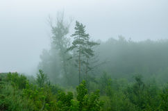 Niebla en el bosque Imagenes de archivo