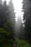 Niebla en el bosque imagen de archivo libre de regalías