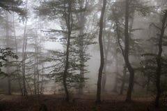 Niebla en el bosque Foto de archivo