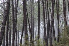 Niebla en el bosque cerca de Saint Jean du Grad foto de archivo