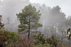 Niebla en el bosque cerca de Saint Jean du Grad imagen de archivo