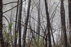 Niebla en el bosque cerca del santo Jean du Gard imagen de archivo