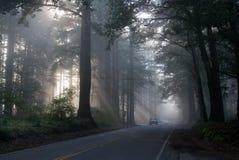 Niebla en el bosque de San Francisco imagen de archivo