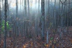 Niebla en el bosque en Wolf Creek Fotos de archivo libres de regalías