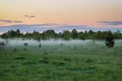 Niebla en el bosque por la mañana Foto de archivo libre de regalías