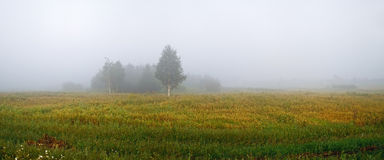 Niebla en el campo Imagen de archivo libre de regalías