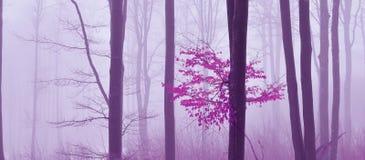Niebla en el fondo místico coloreado bosque Papel pintado artístico forestMagic mágico fairytale Sueño, línea Árbol en un de nieb Imágenes de archivo libres de regalías