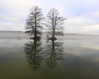 Niebla en el lago 33 Fotos de archivo libres de regalías