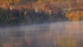 Niebla en el lago de la ma?ana almacen de video