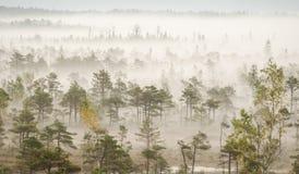 Niebla en el pantano Kemeri Imagen de archivo libre de regalías