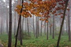 Niebla en el parque Fotografía de archivo libre de regalías