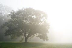 Niebla en el parque de Alexandría Imagenes de archivo