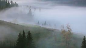 Niebla en el pasto de la montaña almacen de metraje de vídeo