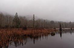 Niebla en la charca foto de archivo libre de regalías