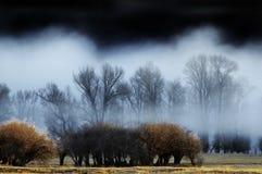 Niebla en los árboles Foto de archivo libre de regalías