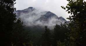 Niebla en los bosques de la montaña foto de archivo